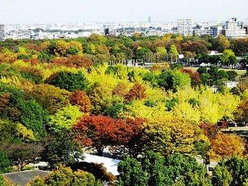 光が丘公園 ケヤキ広場とイチョウ並木の紅葉