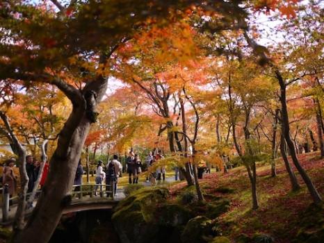 箱根強羅公園2