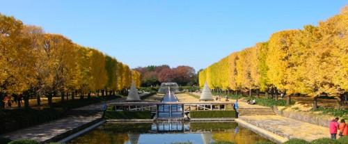 国営昭和記念公園2
