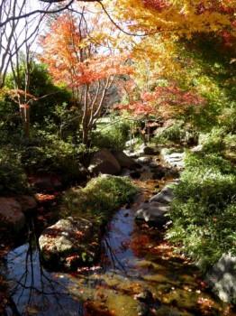 国営昭和記念公園4