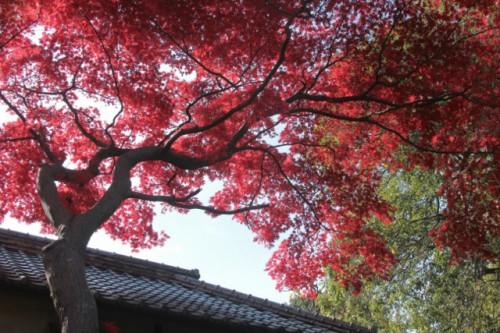 天台宗別格本山 中院3