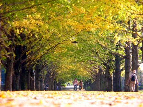 国営昭和記念公園1