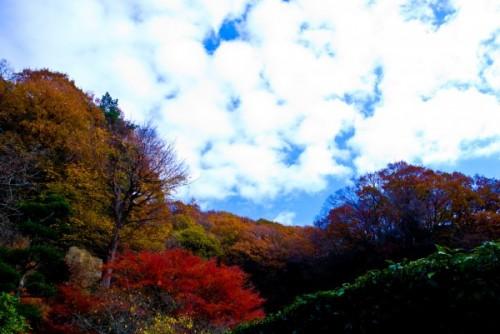 028円山公園01