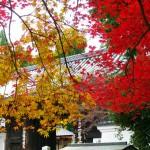 愛宕念仏寺1