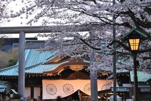 靖国神社と桜