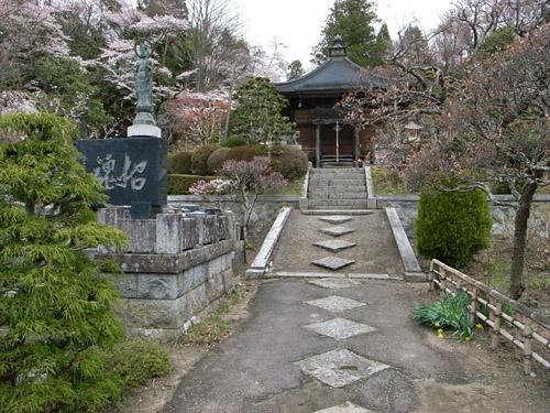 福聚寺の桜
