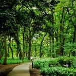 神代植物公園の遊歩道