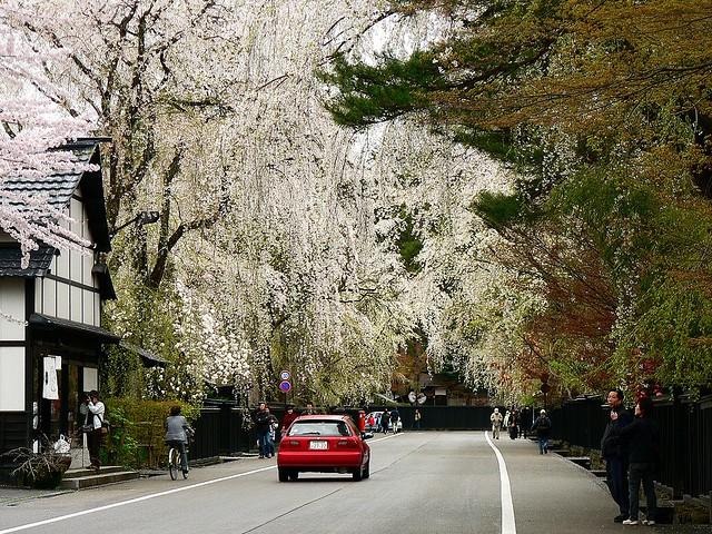 角館の枝垂れ桜