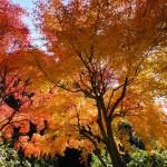 鋸山ロープウェーで紅葉を楽しもう!駐車場と交通アクセス