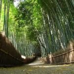 京都・嵐山の名物スポット 竹林の道に心を洗われよう!