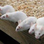 ネズミ駆除の方法。人気の対策グッズと業者の相場