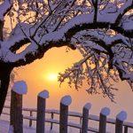 2015年の大寒はいつ?大寒たまごや寒の水とは?
