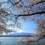 田貫湖キャンプ場の桜の開花予想2015!富士山を見ながらBBQ!