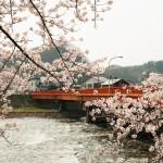 秋田県角館の桜まつり!日程と場所と駐車場は?屋台はある?