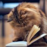 簡単に読書感想文を書く方法は?おすすめの本や作家はこれ!