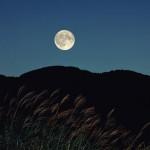 中秋の名月、2014年はいつ?お月見にうさぎがいるのはなぜ?